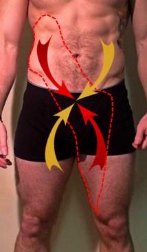 Anterior Oblique System